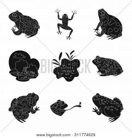 Isolated object of fauna and reptile logo. Set of fauna and anuran stock bitmap illustration. poster