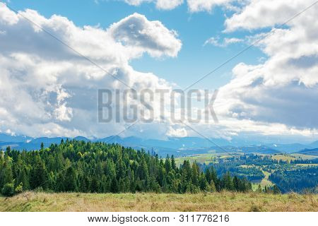 Early Autumn Countryside On A Cloudy Day. Beautiful Landscape In Mountains. Coniferous Forest On Rol
