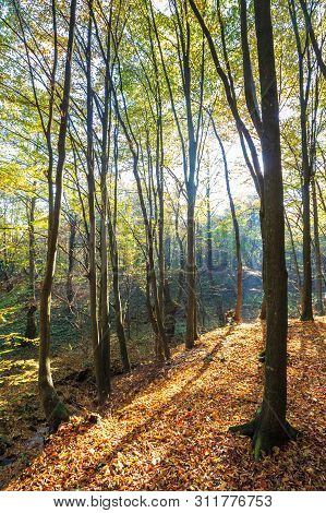 Autumn Forest On A Sunny Day. Beautiful Nature Background With Trees In Yellow Foliage. Lots Of Fall