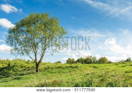Tree On The Grassy Hillside In Early Autumn. Beautiful Scenery At High Noon. Fluffy Clouds On The Sk