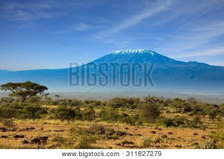Amboseli Park is the most visited park. The snow peak of Kilimanjaro. Savanna with bushes and desert acacies. Interesting trip to Kenya, Africa. The concept of exotic, ecological and photo tourism