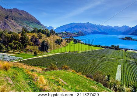 Picturesque vineyard descends down to the water. Adorable little island in the Lake Wanaka. New Zealand, South Island. The concept of ecological and photo tourism