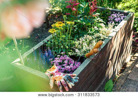Freshly Planted Wooden Planter Containing Salvia Nemorosa, Carnation, Echinacea, Astilbe Japonica, I