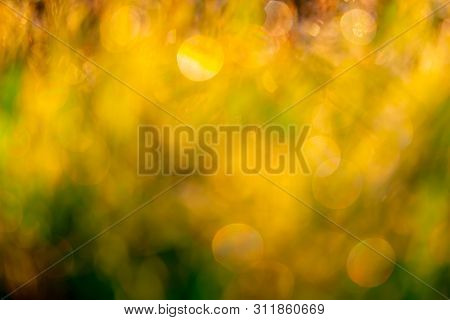 Blurred Golden And Green Grass Field In The Morning With Sunlight. Yellow Bokeh Background Of Sunshi
