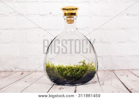Bottle Terrarium With Moss.