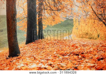 Autumn landscape - yellowed autumn trees and fallen autumn leaves in city autumn park alley in cloudy day. Diffusion filter applied. Autumn colorful nature