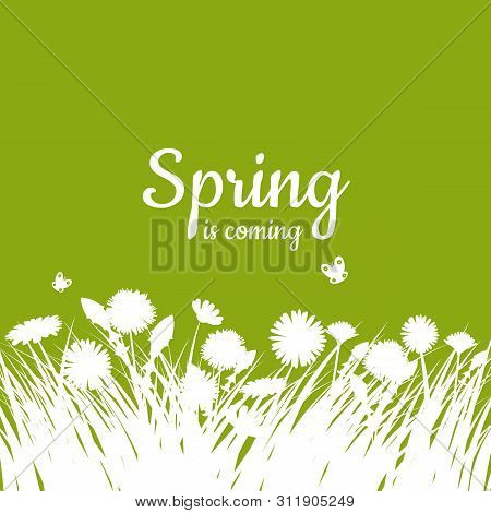 Spring With Green Grass And Chamomile On Green Background. Spring Template Background. Design For Ba