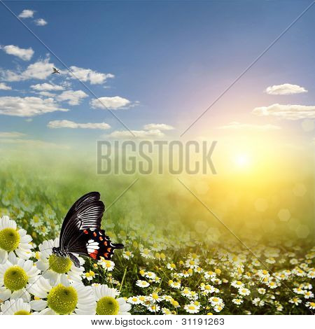 Field meadow daisies in the sun poster