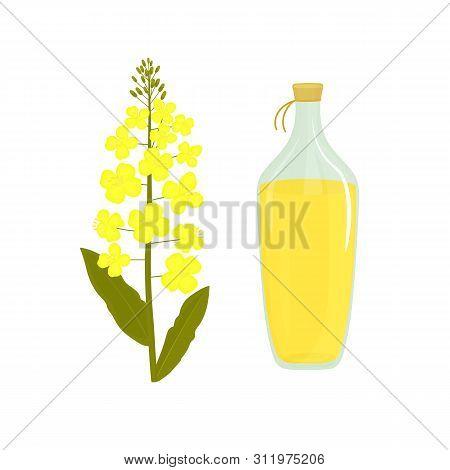 Canola Flower. Bottle Of Rapeseed Oil. Rape Plant
