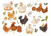 Collection of rooster, hen and chicks isolated on white background. Bundle of chicken with brood. Cute lovely family of domestic fowl or poultry birds. Childish flat cartoon vector illustration. poster