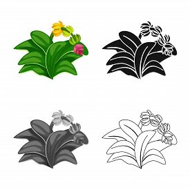 Isolated Object Of Leaf And Banana Sign. Set Of Leaf And Jungle Stock Symbol For Web.