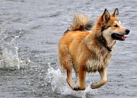 Ol' Sea Dog!