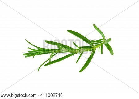 Close-up Of Isolated Fresh Rosemary Twig. Png File Wtih Transparent Background