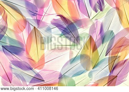 Feathers Multicolored Background In Pastel Colors. Feathers Set Pattern. Natural Pastel Feathers Set