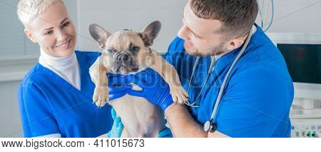 French Bulldog In A Veterinary Clinic. Two Doctors Are Examining Him. Veterinary Medicine Concept. P