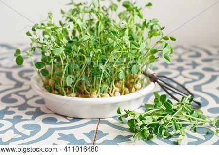 Peas Microgreens With Seeds And Roots. Sprouted Peas Seeds. Sprouting Micro Greens. Seed Germination