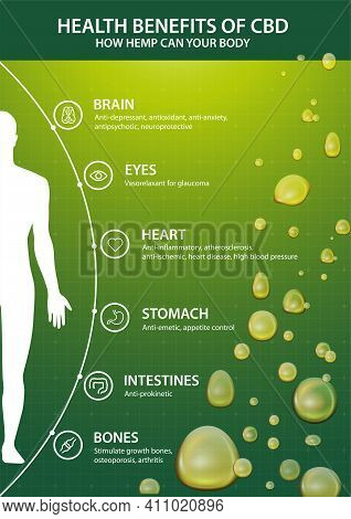 Green Vertical Poster With Inphographic Of Cbd Benefits For Your Body And Silhouette Of Human Body.