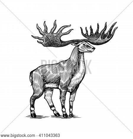 Irish Elk Or Giant Deer Or Great Horn. Prehistoric Mammals. Extinct Animal. Vintage Retro Vector Ill
