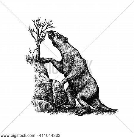Ground Sloth Or Megatheriidae. Prehistoric Mammals. Extinct Animal. Vintage Retro Vector Illustratio
