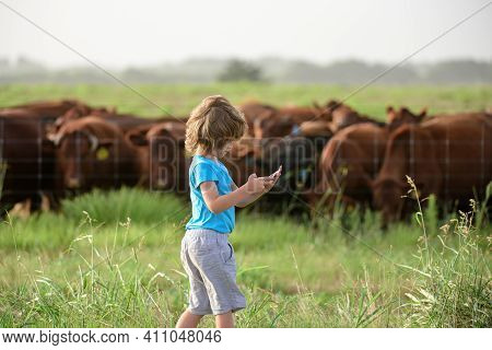 Kid Farmer With Tablet Cow Modern Farm. Summer Kid At Countryside. Children Enjoy In Countryside. Bo