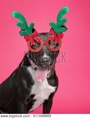 cute dog with a costume on in front of an isolated background