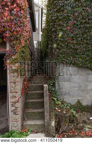 Extremely Narrow Walkway And Stairs Between Two Detached Garages, Ivy Wall Covering, Vertical Aspect