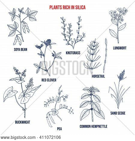Set Of Plants Rich In Silica. Hand Drawn Vector Set Of Medicinal Plants