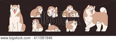 Set Of Isolated Alaskan Malamutes. Cute And Funny Chinese Dogs And Puppies. Happy Doggies Sitting, S