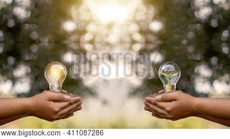 Girl Hand Holding Energy Saving Light Bulb And Hand Holding Small Trees Planted In Energy Saving Lig