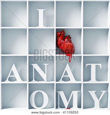 I love anatomy - bizarre style message (3D concept)