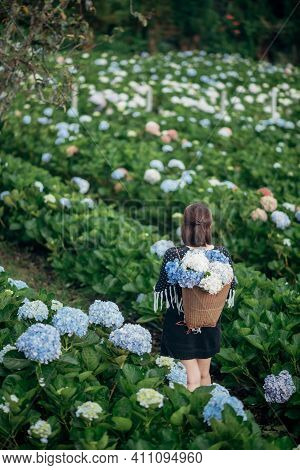 The Scenery Of A Happy Tourist In A Hydrangea Flower Field At Khun Pae, Chiang Mai, Thailand.