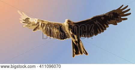 The Black Kite Has Spread Its Strong Wings And Soars In The Sky Colored By Sunrise Or Sunset. Illust