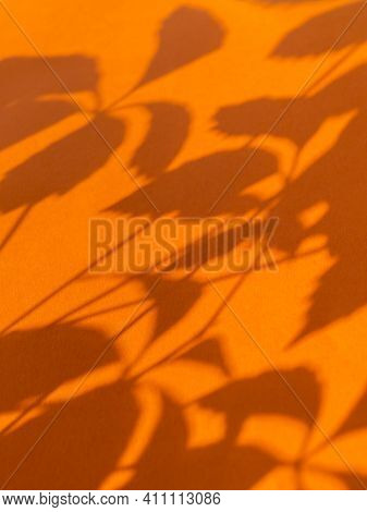 Lacy Shadows Of Virginia Creeper Leaves On Bright Orange Background. Five-leaved Ivy Or Five-finger