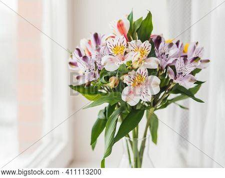 Colorful Alstroemeria Flowers In Glass Vase On Window Sill. Natural Spring Background With White And