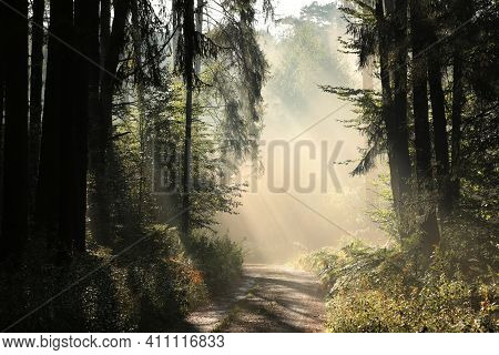 Autumn forest path sun Nature woods landscape sunrise Nature landscape tree landscape Nature background Nature landscape Nature background Nature landscape Nature landscape Nature background landscape Nature background Nature background Nature landscape.