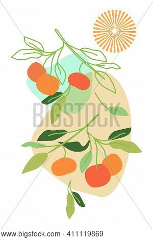 Tangerines On Twigs Drawn Vector And Contooours