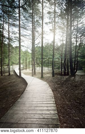 A Wooden Footpath Through The Old Pine Trees. Moss On The Ground. Sun Rays And Morning Fog Through T
