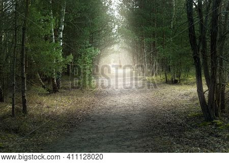 A Dirt Road Through The Arch Of The Old Spruce And Pine Trees In A Mixed Coniferous Forest. Sun Rays