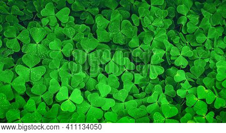 Green Clover Field As St Patrick's Day Background