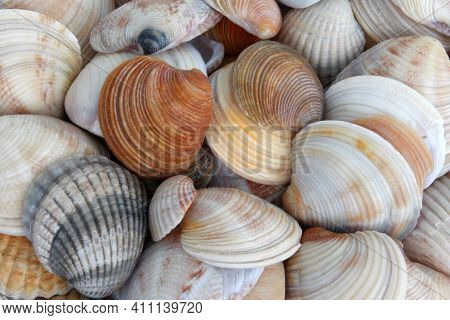 Seashells Background, Seashells Close Up, Top View