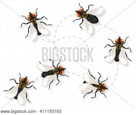 Insect Fly Moves Along A Route On A White Background. Top View.