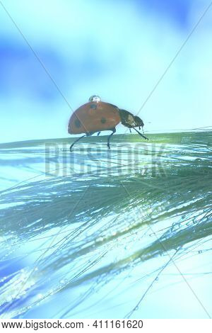 Vertical Backdrop With Climbing Small Red Lady Bug On Long Green Grass On Blurred Bokeh Effect