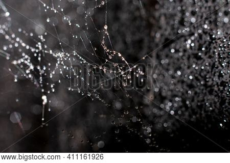 Natural Background With Spiderweb. Fragile Filaments Of Wet Web With Plenty Little Dew Or Rain Dropl