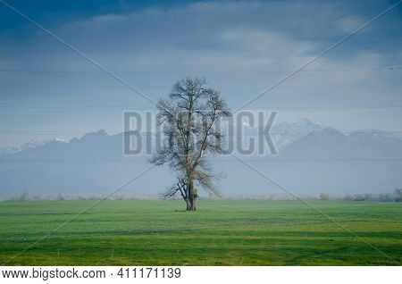 Only Tree At An Open Field With Blue Sky . The Only Tree In The Field . Solitary Tree On Grassy Hill