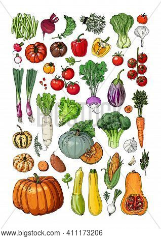 Vegetables And Fruits Food Vector Poster. Color Sketch Of Products. Decor For Kitchen And Restaurant