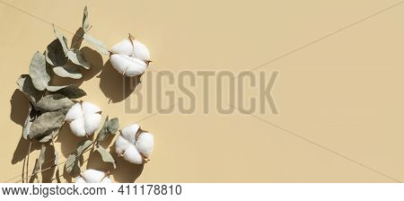 Cotton Flowers Twigs Of Eucalyptus With Sun Shadows On Beige Background Flat Lay Top View. Creative