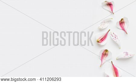 Banner With Fragile Flower Petals And Copy Space. Pink Alstroemeria Petals Scattering On White Backg