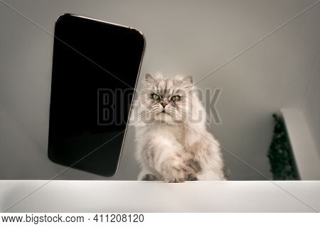 Naughty Playful Bad Cat Throwing Or Dropping Mobile Phone On The Floor From The Table. Cat Playing W