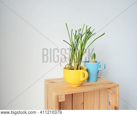 Yellow Cup With Muscari And Blue Cup With Hyacinth On Wooden Box Over White