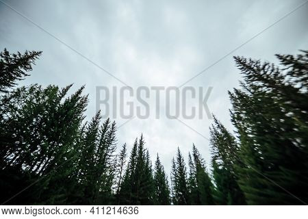 Blurry Silhouettes Of Fir Tops On Cloudy Sky Background. Atmospheric Minimal Forest Scenery In Blur.